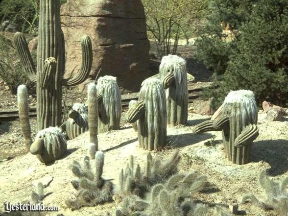 Fotografije kaktusa Minetrain_cacti