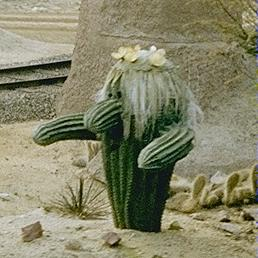 Photo of cacti