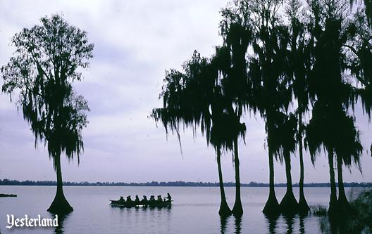 Cypress trees in Lake Eloise