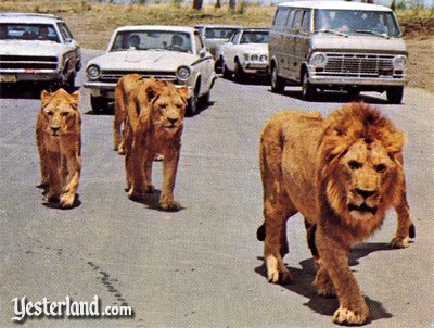 Yesterland Lion Country Safari In